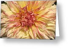Dahlia Named Misty Explosion Greeting Card