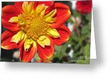 Dahlia Named Pooh Greeting Card