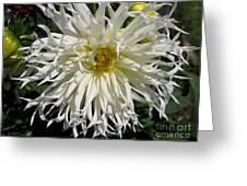 Dahlia Named Tsuki Yori No Shisa Greeting Card
