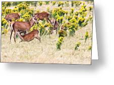 Deers Greeting Card by MotHaiBaPhoto Prints