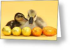 Embden X Greylag Gosling And Mallard Greeting Card
