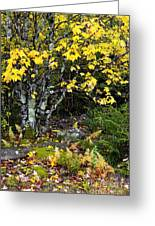 Fall Color Highland Scenic Highway Greeting Card