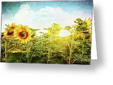 Field Of Colorful Sunflowers And Blue Sky  Greeting Card