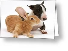 Flemish Giant Rabbit And Miniature Bull Greeting Card
