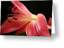 Floral 0039 Greeting Card