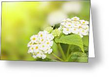 Floral Background. Lantana Flowers Greeting Card
