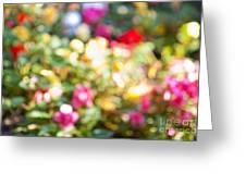 Flower Garden In Sunshine Greeting Card