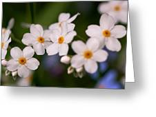 Forget Me Not Greeting Card