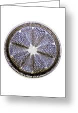 Fossil Diatom, Light Micrograph Greeting Card by Frank Fox