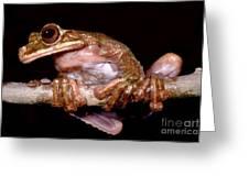 Fringe Limb Tree Frog Greeting Card