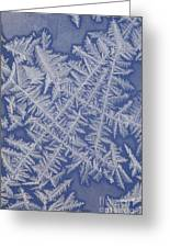 Frost On A Window Greeting Card