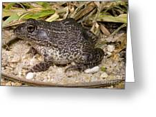Gopher Frog Greeting Card