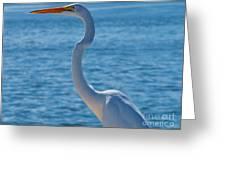 Great Egret  White Heron Greeting Card
