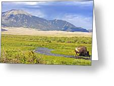 Great Sand Dunes Bison Greeting Card