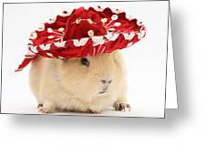 Guinea Pig Wearing A Hat Greeting Card