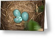 Hatching Robin Nestlings Greeting Card