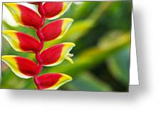 Heliconia Blossom Greeting Card