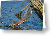 Heron Strike Greeting Card