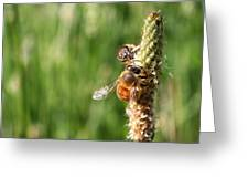 2 Honey Bees Hard At Work Greeting Card