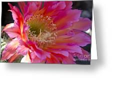 Hot Pink Cactus Flower Greeting Card