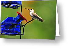 Hummer At The Feeder Greeting Card