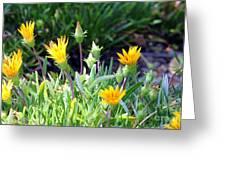 Ice Plant Greeting Card