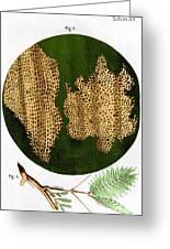 Illustration Of Cork Wood Cells Greeting Card