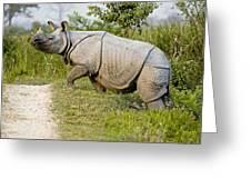 Indian Rhinoceros Greeting Card by Tony Camacho