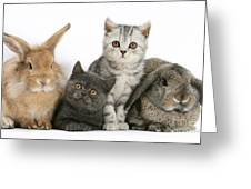 Kittens And Rabbits Greeting Card