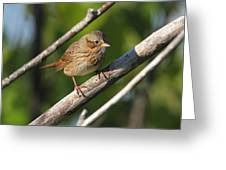 Lincolns Sparrow Greeting Card