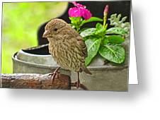 Little Girl Finch Greeting Card