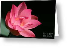 Lotus Diva Greeting Card