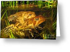 Mating Toads Greeting Card