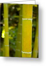 Mystical Bamboo Greeting Card