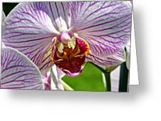 Orchid Flower Greeting Card