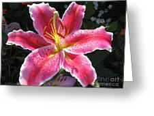 Oriental Lily Named La Mancha Greeting Card
