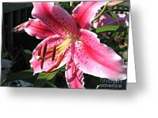 Oriental Lily Named Tiber Greeting Card