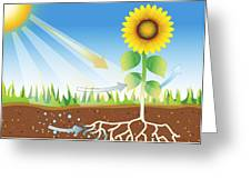 Photosynthesis, Artwork Greeting Card