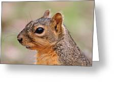 Pine Squirrel Greeting Card