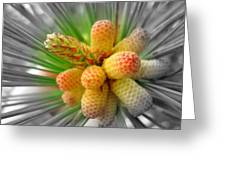 Pinecones Greeting Card
