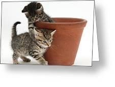Playful Kittens Greeting Card