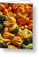 Pumpkins And Gourds Greeting Card