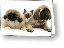 Puppies And Kitten Greeting Card by Jane Burton