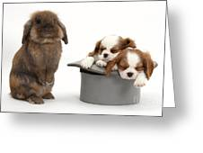 Rabbit And Spaniel Pups Greeting Card