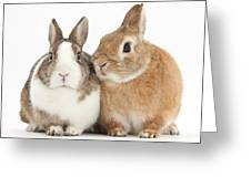 Rabbits Greeting Card