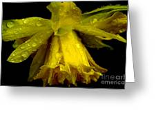 Raindrops On Double Daffodil Greeting Card