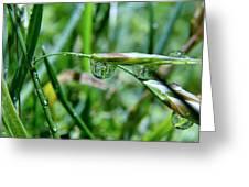 Raindrops On Grass Greeting Card