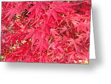 Red Leaves 1 Greeting Card