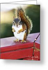Red Squirrel On Railing Greeting Card