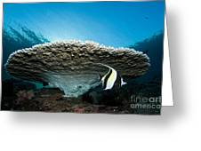 Reef Scene With Corals And Fish Greeting Card